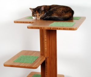 cat sitting on non-toxic cat tree with scratcher